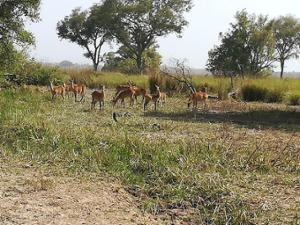 Tourisme au Bénin: Réserves et vies animalières